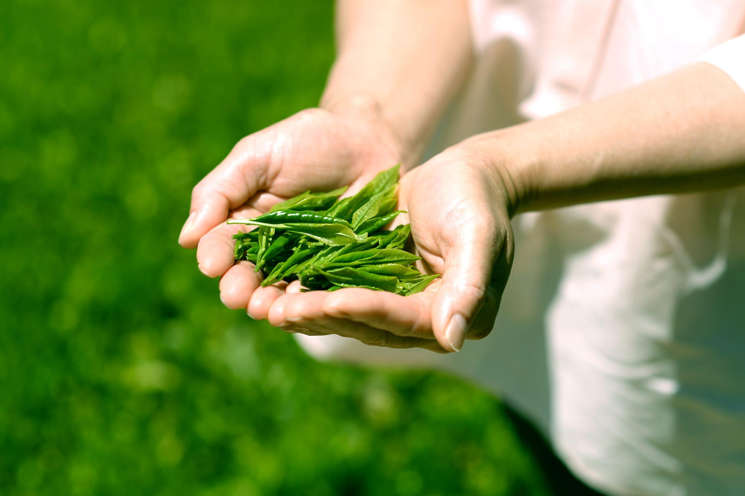 八十八が大和茶を選ぶ理由/大和茶の歴史